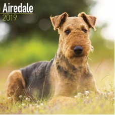 2019 AIREDALE TERRIER CALENDER, BY AVONSIDE
