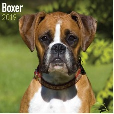 2019 BOXER DOGS CALENDER, BY AVONSIDE