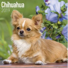 2019 CHIHUAHUA CALENDER, BY AVONSIDE