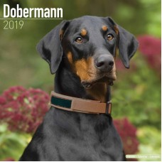 2019 DOBERMANN CALENDAR, BY AVONSIDE