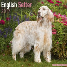2019 ENGLISH SETTER CALENDAR, BY AVONSIDE
