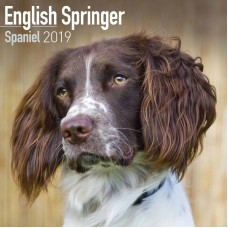 2019 ENGLISH SPRINGER SPANIEL, BY AVONSIDE