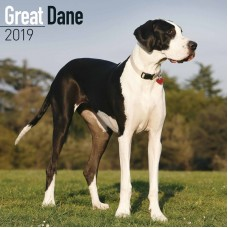 2019 GREAT DANE CALENDAR, BY AVONSIDE