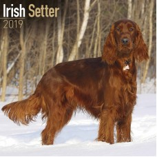 2019 IRISH SETTER CALENDER, BY AVONSIDE