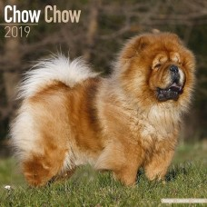 2019 CHOW CHOW  AVONSIDE CALENDER