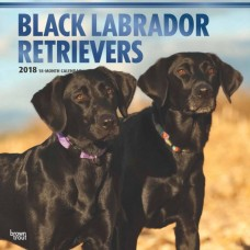 2018 BLACK LABRADOR RETRIEVERS WALL CALENDAR