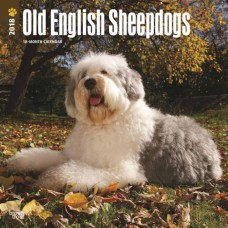 2018 OLD ENGLISH SHEEPDOGS CALENDAR