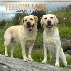 2018 YELLOW LABRADOR RETRIEVERS CALENDAR